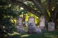 tree-cemetery-yellow-light-wm