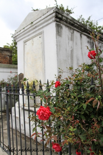 rose-crypt-watermark-_